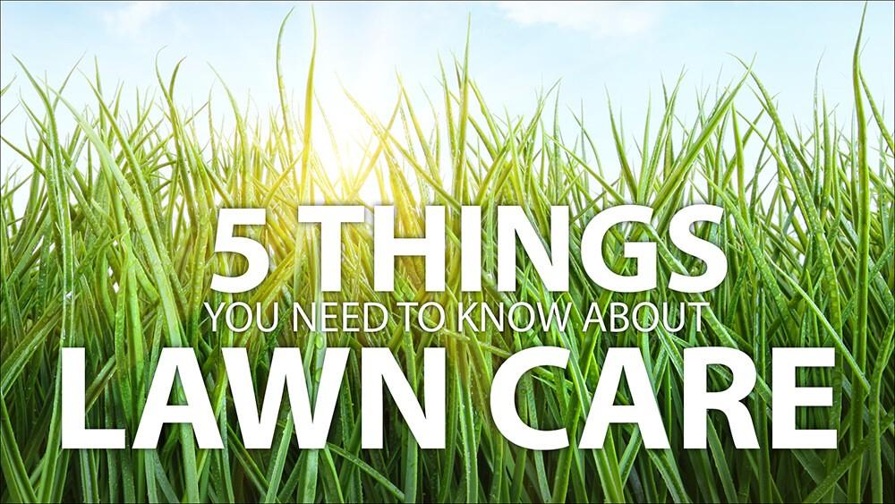 Grow a Healthy Lawn
