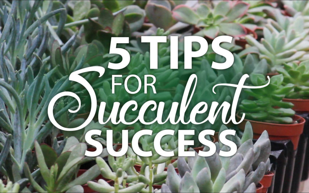 5 Tips for Succulent Success
