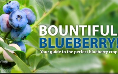 Bountiful Blueberries!