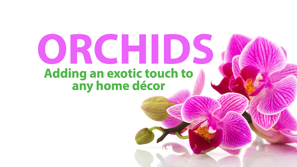 Orchid Decor