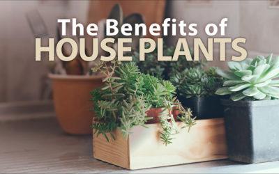 The Benefits of Houseplants