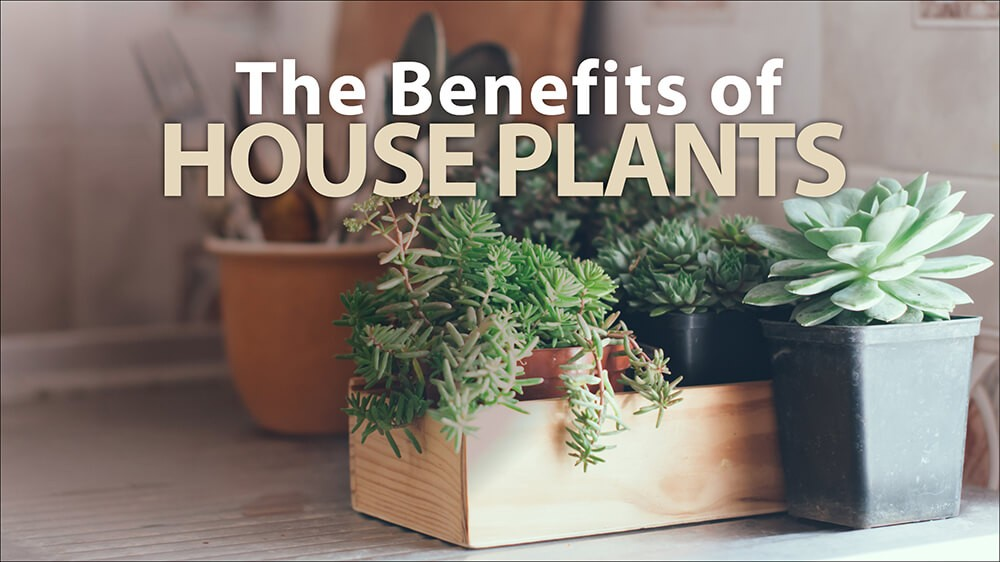 The Benefits of Houseplants