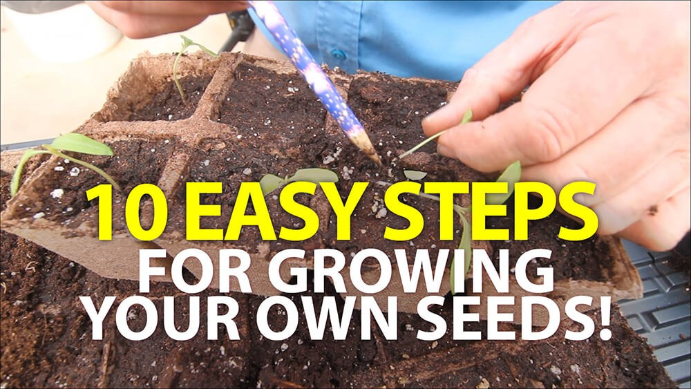 10 Easy Steps for Growing Your Own Seeds!