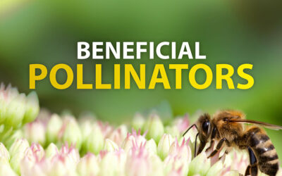 Beneficial Pollinators