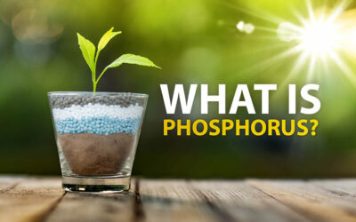 What is Phosphorus?