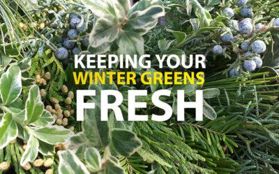 Keep Your Winter Greens Fresh
