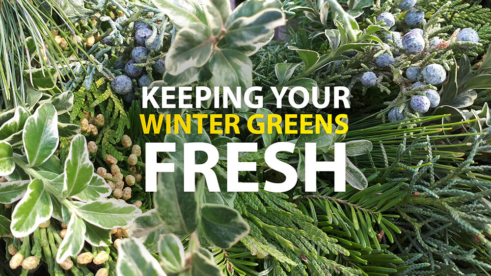 Keep Your Winter Greens Fresh