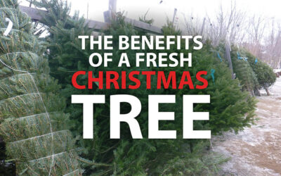 The Benefits of A Fresh Christmas Tree