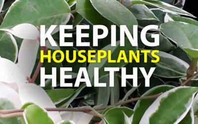 Keeping Houseplants Healthy