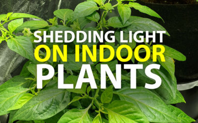Shedding Light on Indoor Plants